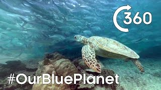 Download Turtle-y Awesome 360° 🐢 #OurBluePlanet | Earth Unplugged Video