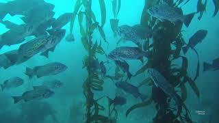 Download Monterey & Diving Point Lobos in 4K Video