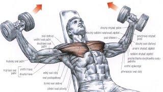 Download Best Bodybuilding Exercises Video
