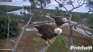 Download SWFL Eagles~ Hungry Intruder Chased Away By Mom & Dad! Slo Mo 1.12.18 Video
