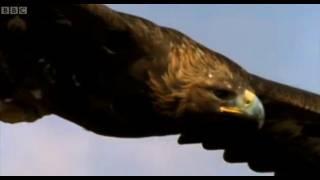 Download Eagle vs Hare | Predators | BBC Earth Video