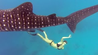 Download GoPro Awards: Ocean Ramsey and a Whale Shark Video