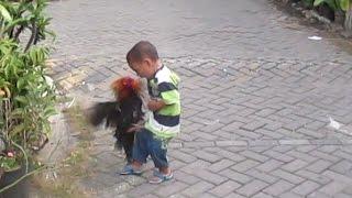 Download lucu anak kecil berantam vs ayam jago Video