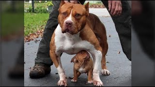 Download Cute Mother DOgs Protecting Their Babies Compilation - Dog Protects Puppy Videos Video