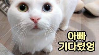 Download 고양이도 외롭다! 주인을 반기는 마중냥이들 Video