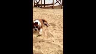 Download Hilarious puppy reaction to a lime Video