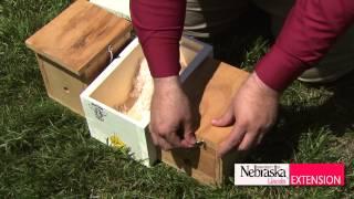 Download Bumblebees Video