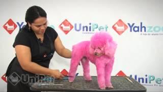 Download UniPet Vídeo aula tosa padrão Poodle Video