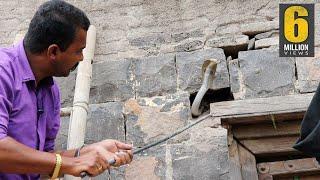 Download ऐसा रेस्क्यू ऑपरेशन आपने कभी नही देखा होगा   Very Dangerous cobra snake Rescue operation from india Video