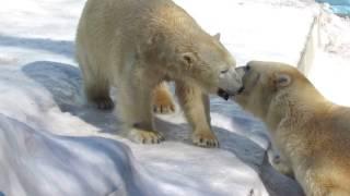 Download Любовь Кая и Герды 21.03.17 Новосибирский зоопарк Video