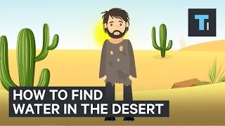 Download Here's how to find water if you're ever stuck in the desert Video