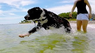 Download PUPPY'S FIRST TIME AT THE BEACH! Video