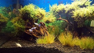 Download Aquascape Decoration | Under Water House Video