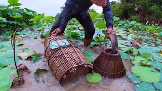 Download Fishing daily - Catfishes & Mud fishing by Hands Use Bamboo fishing trap in Mud by a Fisherman Video
