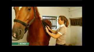 Download Fontos megtanulni a ló helyes felszerelését! Video