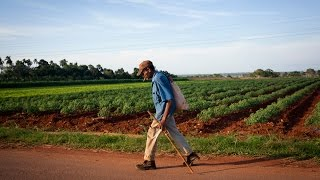 Download What Cuba can teach America about organic farming Video