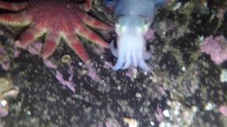 Download Conservation Bay, Cuttlefish Video
