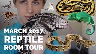 Download MARCH 2017 REPTILE ROOM TOUR (TEGU, CHAMELEON, SNAKES, GECKOS, AND INVERTEBRATES) Video