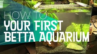 Download How To: Your First Betta Aquarium Setup | 🐻 Bear Necessities Video