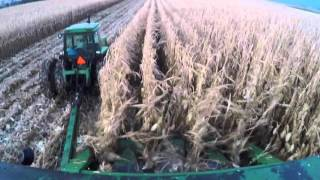 Download A recap of the 2015 corn crop season on our organic dairy farm Video