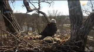 Download Decorah Eagles~N2B- Mom Protects Nest From Intruder Eagle-Slo Mo 4.22.18 Video