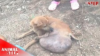 Download Dog with Massive Tumor Underwent Great Transformation Video