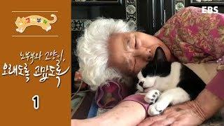 Download 고양이를 부탁해 - 노부부와 고양이,오래도록 고맙도록 #001 Video