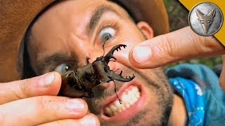 Download PINCHED by a GIANT STAG BEETLE! Video