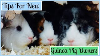 Download Top 9 Tips for New Guinea Pig Owners Video