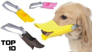 Download Top 10 Dumbest Inventions For Dogs Video