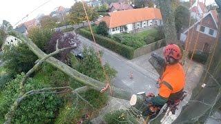 Download Arborist big beech rigging Video