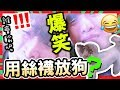 Download 【世界首創】輸了用絲襪放狗?🐶「絲襪套頭」對決!!(中字) Video
