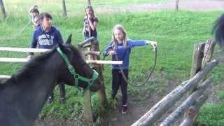 Download Horses go for dinner /Los caballos van a cenar /Pferde gehen zum Abendessen, konie ,kuce /馬は夕食に行きます Video