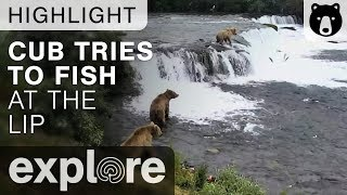 Download Bear Cub Attempts to Fish - Brown Bears Live Cam Highlight 07/11/17 Video