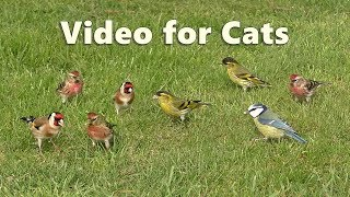 Download ASMR for Cats - Bird Sounds Relaxation Video