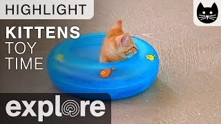 Download Kitten Cabana Kitten Relaxing In Toy - Live Cam Highlight 04/25/17 Video