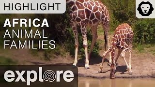 Download African Animal Families! - Live Cam Highlight Video