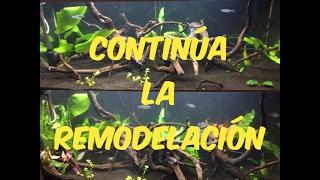 Download SIGUE LA REMODELACIÓN! NUEVAS PLANTAS Y PECES! |HD| Video
