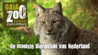 Download GaiaZOO Kerkrade: de mooiste dierentuin van Nederland! Video