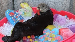 Download It's an Eggstravaganza for our Sea Otters! Video