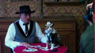 Download Famous Poker Playing Cat - Princess Sugar Pie Plays Poker with Owner/Trainer Jim Barbee in Studio! Video
