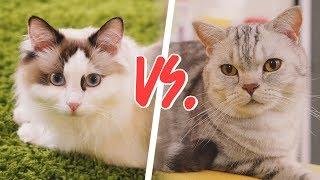 Download 고양이가 질투를 하면 이렇게 무섭습니다 Video