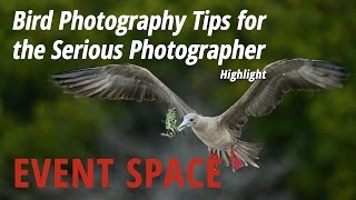 Download Bird Photography Tips for the Serious Photographer: Highlight Video