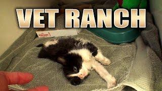 Download Kitten Walks on Two Legs Video