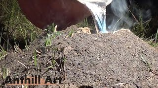 Download Largest Aluminum Fire Ant Colony Cast So Far (Cast #072) Video
