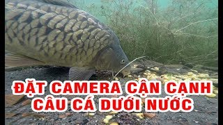 Download Đặt camera cận cạnh câu cá chép dưới nước | Góc sẻ chia Video