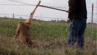 Download deer stuck in fence Video