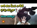 Download కాకి తల మీద వాలితే ఎలా ఛస్తారో తెలుసుకుంటే మీ పని అంతే Crow Effects on Humans by Planet Telugu Video
