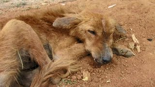 Download Dog starving from broken jaw rescued Video