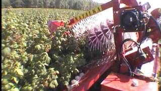 Download NATALKA - półrzędowy kombajn do zbioru malin jesiennych (raspberry harvester) Video